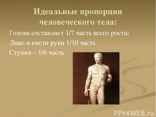 Идеальные пропорции человеческого тела: Голова составляет 1/7 часть всего роста;