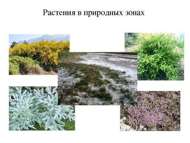 Растения в природных зонах