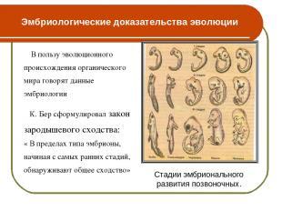 Эмбриологические доказательства эволюции В пользу эволюционного происхождения ор