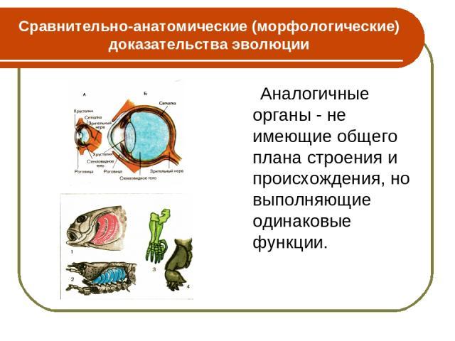 Сравнительно-анатомические (морфологические) доказательства эволюции Аналогичные органы - не имеющие общего плана строения и происхождения, но выполняющие одинаковые функции.