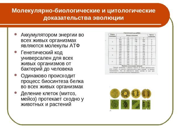 Молекулярно-биологические и цитологические доказательства эволюции Аккумулятором энергии во всех живых организмах являются молекулы АТФ Генетический код универсален для всех живых организмов от бактерий до человека Одинаково происходит процесс биоси…