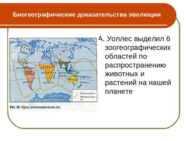 Биогеографические доказательства эволюции А. Уоллес выделил 6 зоогеографических областей по распространению животных и растений на нашей планете