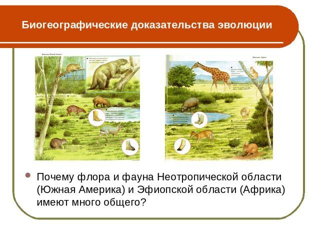 Биогеографические доказательства эволюции Почему флора и фауна Неотропической области (Южная Америка) и Эфиопской области (Африка) имеют много общего?