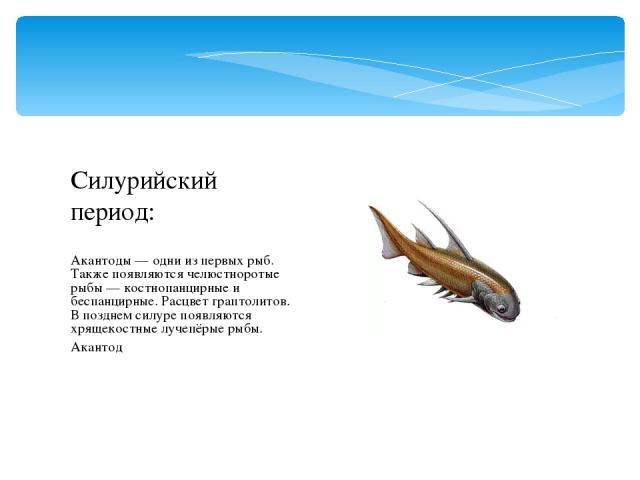 Акантоды — одни из первых рыб. Также появляются челюстноротые рыбы — костнопанцирные и беспанцирные. Расцвет граптолитов. В позднем силуре появляются хрящекостные лучепёрые рыбы. Акантод Силурийский период: