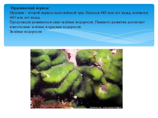 Ордовикский период: Ордовик – второй период палеозойской эры. Начался 485 млн лет назад, кончился 443 млн лет назад. Продолжали развиваться сине-зелёные водоросли. Пышного развития достигают известковые зелёные и красные водоросли. Зелёные водоросли