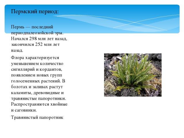 Пермь — последний периодпалеозойской эры. Начался 298 млн лет назад, закончился 252 млн лет назад. Флора характеризуется уменьшением количество сигиллярий и кордаитов, появлением новых групп голосеменных растений. В болотах и заливах растут каламиты…