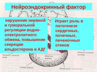 Нейроэндокринный фактор нарушение нервной и гуморальной регуляции водно-электрол