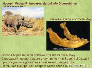 Носоріг Мерка (Rhinoceros Mercki або Dicerorhinus kirchbergensis) Носоріг Мірка