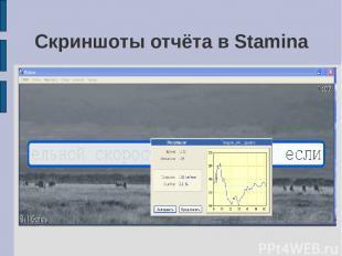 Скриншоты отчёта в Stamina