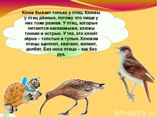 Клюв бывает только у птиц. Клювы у птиц разные, потому что пища у них тоже разна