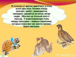В отличие от других животных, у птиц всего две ноги. Ногами птицы хватают, гребу