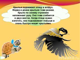 Крылья поднимают птицу в воздух. Форма и длина крыльев тоже разная. Крыло по сво