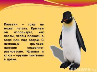Пингвин – тоже не может летать. Крылья он использует, как ласты, чтобы плавать в