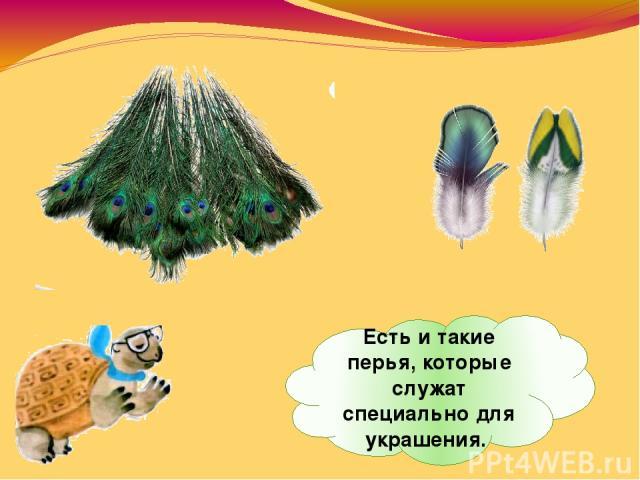 Есть итакие перья, которые служат специально для украшения.