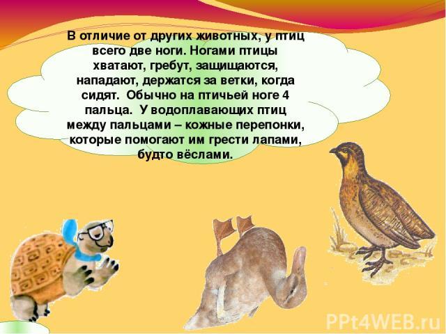 В отличие от других животных, у птиц всего две ноги. Ногами птицы хватают, гребут, защищаются, нападают, держатся за ветки, когда сидят. Обычно на птичьей ноге 4 пальца. У водоплавающих птиц между пальцами – кожные перепонки, которые помогают им гре…