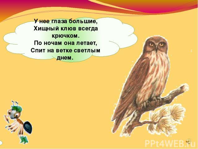 Унее глаза большие, Хищный клюв всегда крючком. Поночам она летает, Спит наветке светлым днем.