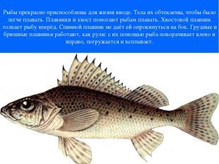Рыбы прекрасно приспособлены для жизни вводе. Тела их обтекаемы, чтобы было легч