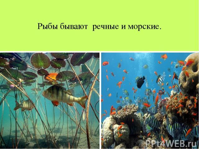Рыбы бывают речные и морские.