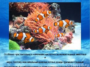 Особенно чувствительны к изменению кислотности мелкие водные животные и икра, по