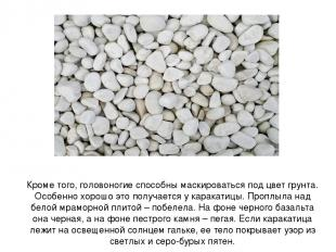 Кроме того, головоногие способны маскироваться под цвет грунта. Особенно хорошо
