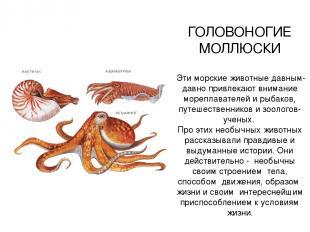 ГОЛОВОНОГИЕ МОЛЛЮСКИ Эти морские животные давным-давно привлекают внимание мореп