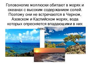 Головоногие моллюски обитают в морях и океанах с высоким содержанием солей. Поэт