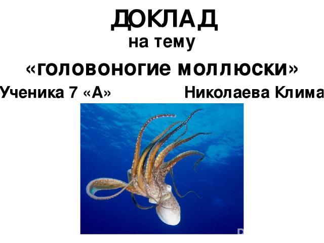 «головоногие моллюски» ДОКЛАД на тему Ученика 7 «А» Николаева Клима