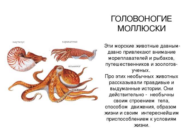 ГОЛОВОНОГИЕ МОЛЛЮСКИ Эти морские животные давным-давно привлекают внимание мореплавателей и рыбаков, путешественников и зоологов-ученых. Про этих необычных животных рассказывали правдивые и выдуманные истории. Они действительно - необычны своим стро…