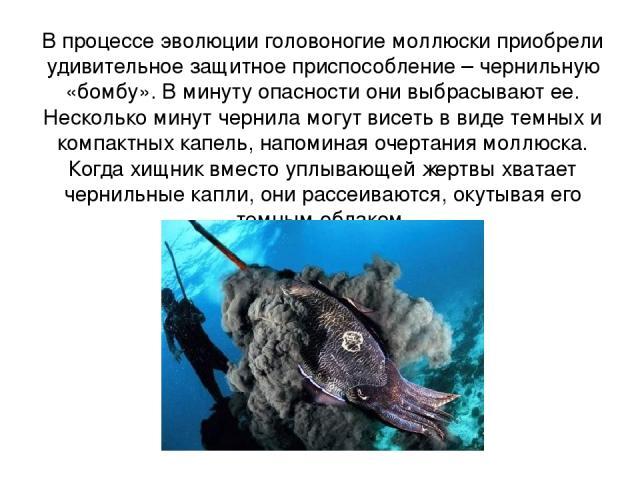 В процессе эволюции головоногие моллюски приобрели удивительное защитное приспособление – чернильную «бомбу». В минуту опасности они выбрасывают ее. Несколько минут чернила могут висеть в виде темных и компактных капель, напоминая очертания моллюска…