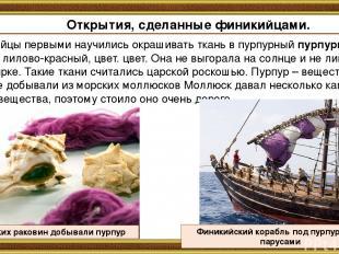 Финикийцы первыми научились окрашивать ткань в пурпурный пурпурный, то есть лило