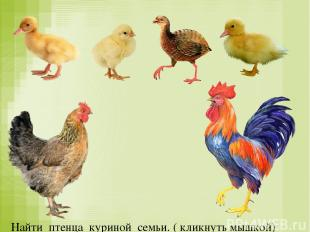 Найти птенца куриной семьи. ( кликнуть мышкой)