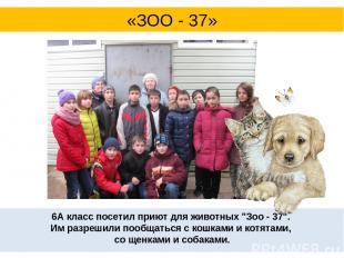 """6А класс посетил приют для животных """"Зоо - 37"""". Им разрешили пообщаться с кошка"""