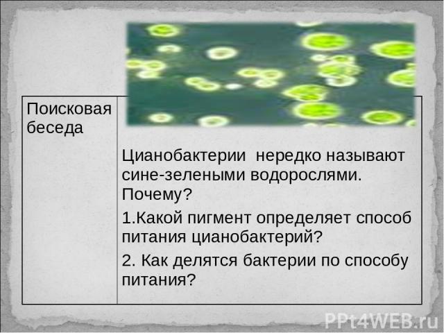 Поисковая беседа Цианобактерии нередко называют сине-зелеными водорослями. Почему? 1.Какой пигмент определяет способ питания цианобактерий? 2. Как делятся бактерии по способу питания?