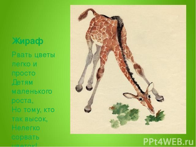 Жираф Рвать цветы легко и просто Детям маленького роста, Но тому, кто так высок, Нелегко сорвать цветок!