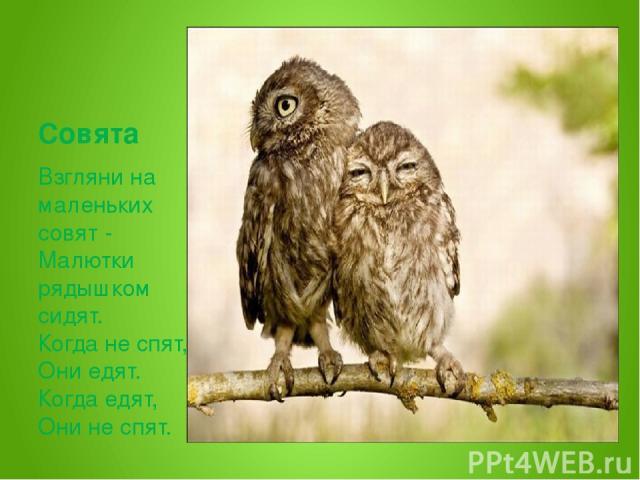Совята Взгляни на маленьких совят - Малютки рядышком сидят. Когда не спят, Они едят. Когда едят, Они не спят.