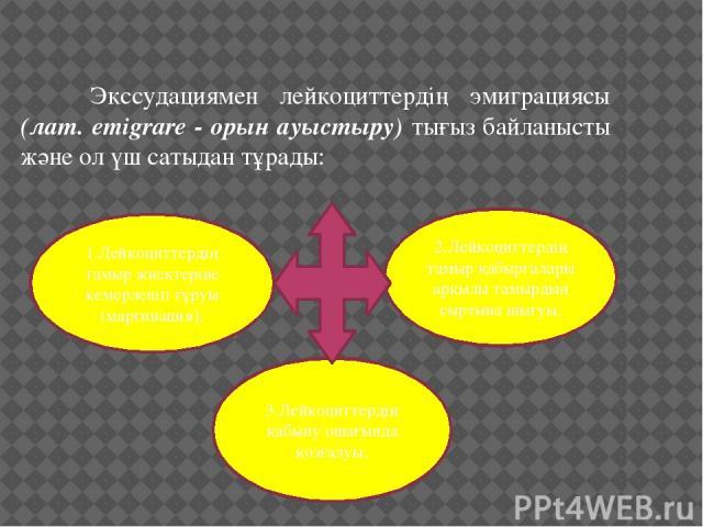 Экссудациямен лейкоциттердің эмиграциясы (лат. emigrare - орын ауыстыру) тығыз байланысты және ол үш сатыдан тұрады: 1.Лейкоциттердің тамыр жиектеріне кемерленіп тұруы (маргинация); 2.Лейкоциттердің тамыр қабырғалары арқылы тамырдың сыртына шығ…