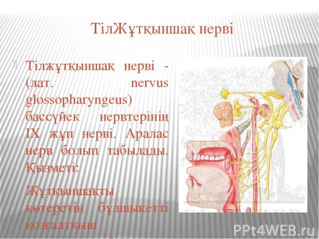 ТілЖұтқыншақ нерві Тілжұтқыншақ нерві - (лат. nervus glossopharyngeus) бассүйек нервтерінің ІХ жұп нерві. Аралас нерв болып табылады. Қызметі: Жұтқыншақты көтеретін бұлшықетті қозғалтқыш иннервациялайды Құлақмаңы безін инневациялап, секрет бөлуіне қ…