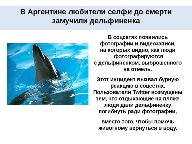 В Аргентине любители селфи до смерти замучили дельфиненка В соцсетях появились фотографии ивидеозаписи, накоторых видно, каклюди фотографируются сдельфиненком, выброшенного на отмель. Этот инцидент вызвал бурную реакцию всоцсетях. Пользователи…