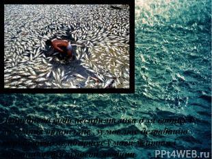 Забруднена вода несприятлива для водних і наземних організмів ,зумовлює деградац