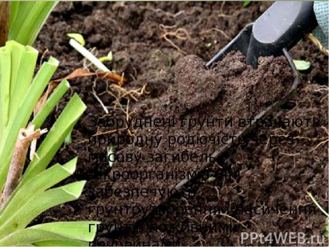 Забруднені грунти втрачають природну родючість через масову загибель мікроорганізмів ,які забезпечують грунтоутворення і насичення грунтів поживними речовинами .