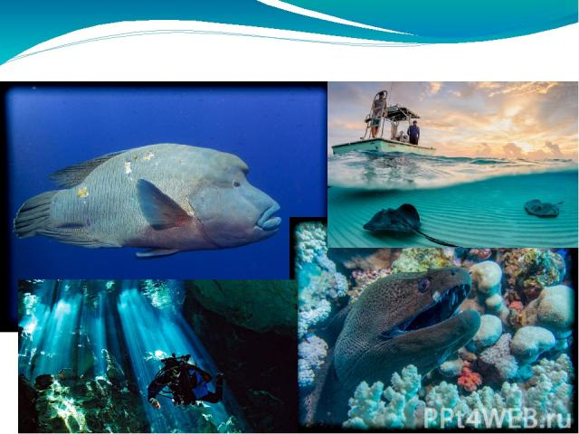 Amazing underwater world !!!!!!