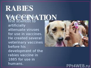 RABIES VACCINATION Pasteur was the first scientist to artificially attenuate vir