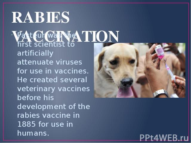 RABIES VACCINATION Pasteur was the first scientist to artificially attenuate viruses for use in vaccines. He created several veterinary vaccines before his development of the rabies vaccine in 1885 for use in humans.