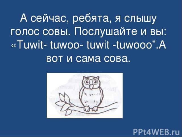 """А сейчас, ребята, я слышу голос совы. Послушайте и вы: «Tuwit- tuwoo- tuwit -tuwooo"""".А вот и сама сова."""