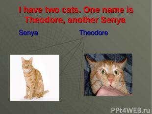 I have two cats. One name is Theodore, another Senya Senya Theodore