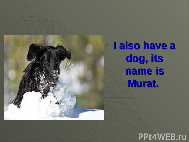 I also have a dog, its name is Murat.
