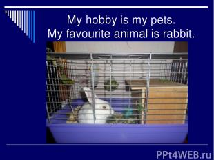 My hobby is my pets. My favourite animal is rabbit.