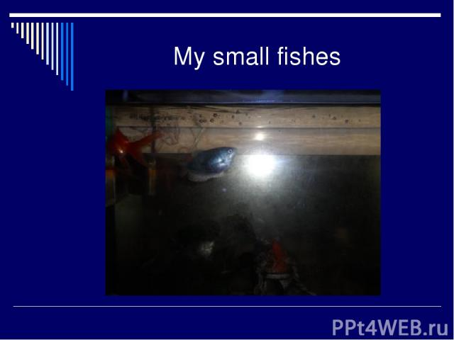 My small fishes