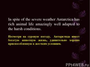 In spite of the severe weather Antarctica has rich animal life amazingly well ad