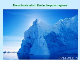 The animals which live in the polar regions